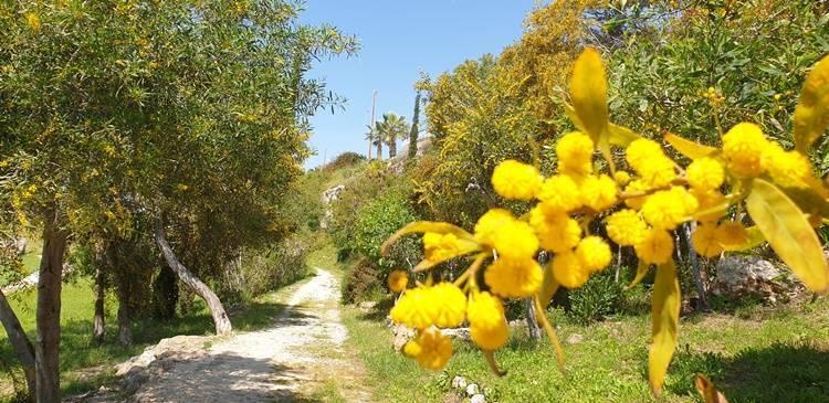 Frühling auf Zypern wenn die Natur blüht