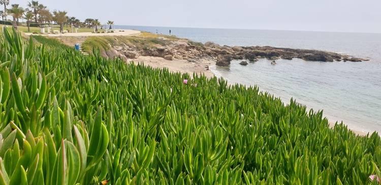 Ein wunderschönes Strand in paphos auf Zypern