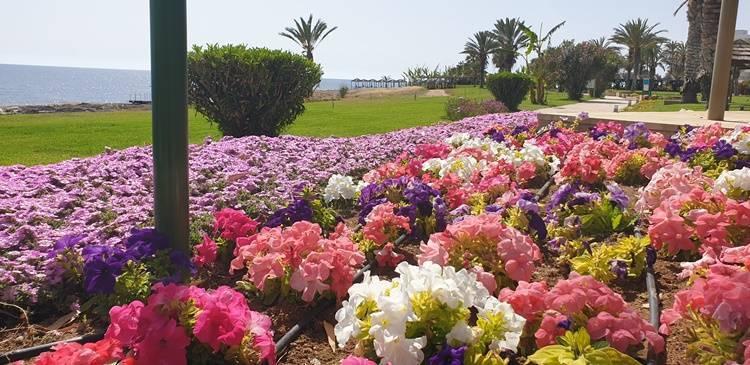 Urlaub auf Zypern in Paphos