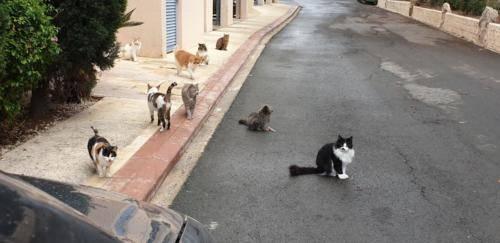 Katzen Empfang
