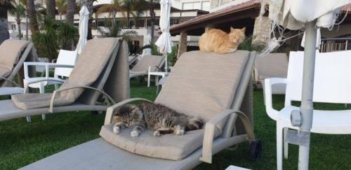 Zwei Freunde auf Zypern
