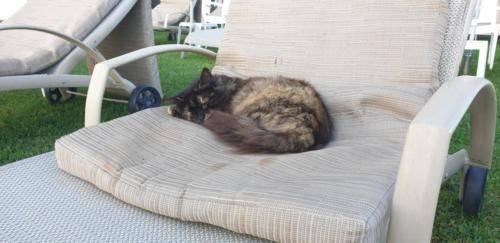 Cats Siesta Cyprus