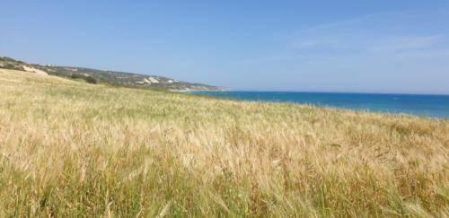 Natur in Paphos