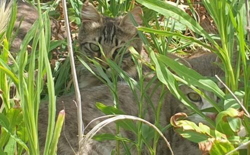 Katze versteckt sich im Grass