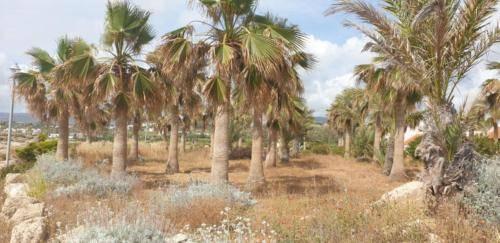 Palmen auf Zypern
