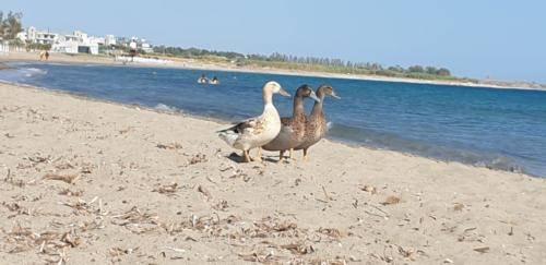RIKOS Beach in Paphos.