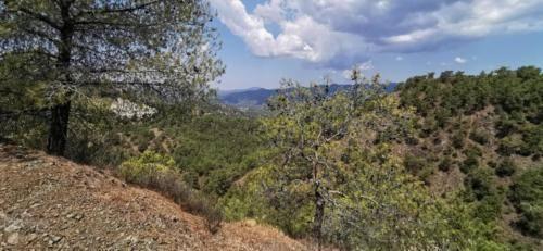 Trodos Zypern - faszinierende Berglandschaft 23