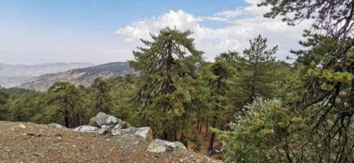 Trodos Zypern - faszinierende Berglandschaft 16