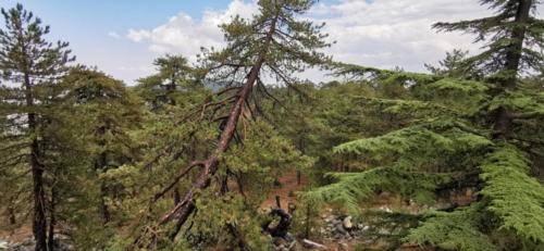 Trodos Zypern - faszinierende Berglandschaft 12