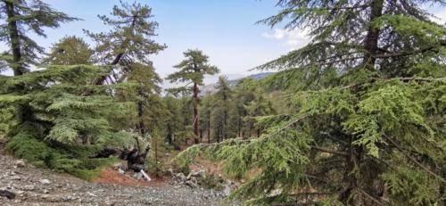 Trodos Zypern - faszinierende Berglandschaft 11