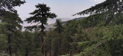 Trodos Zypern - faszinierende Berglandschaft 10