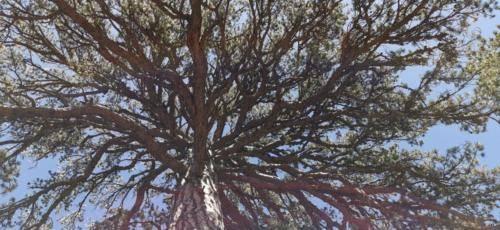 Trodos Zypern - faszinierende Berglandschaft 03