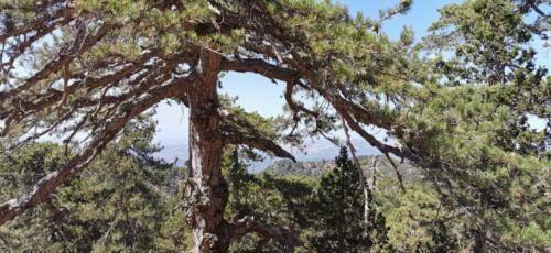 Trodos Zypern - faszinierende Berglandschaft 01