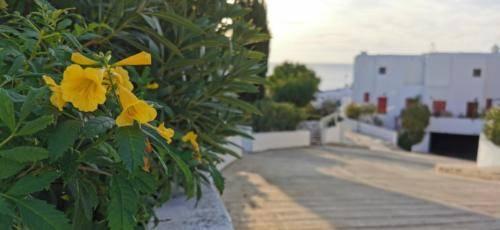 Ikaria Village - mitten in Paradise auf Zypern Paphos.
