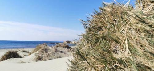 Zypern Wüste im Herbst 19